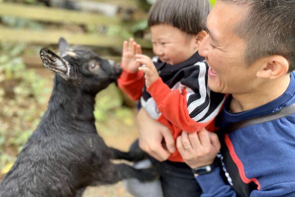 真實版跳跳羊在這!山林小秘境鹿羽松牧場,跟小鹿斑比、捲毛綿羊豬一起玩吧!