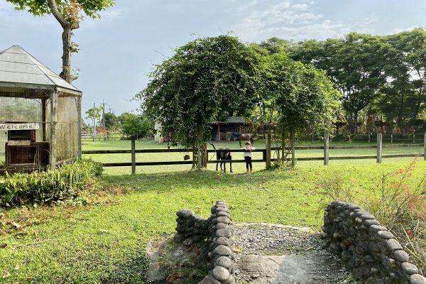 來去米拉夢地住一晚!隱藏在花蓮壽豐的歐式農莊民宿,有馬有羊有動物,賣住宿更賣生活!跟孩子一起學會好好生活。